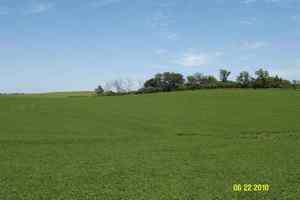 Decatur, Nebraska Crop Result
