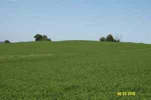 Decatur Nebraska Crop Responses
