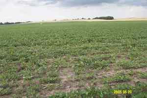 Elk Creek, Nebraska Crop Results